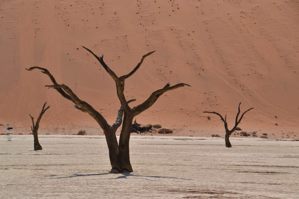 Visiting Deadvlei on a self-drive trip in Sossusvlei, Namibia