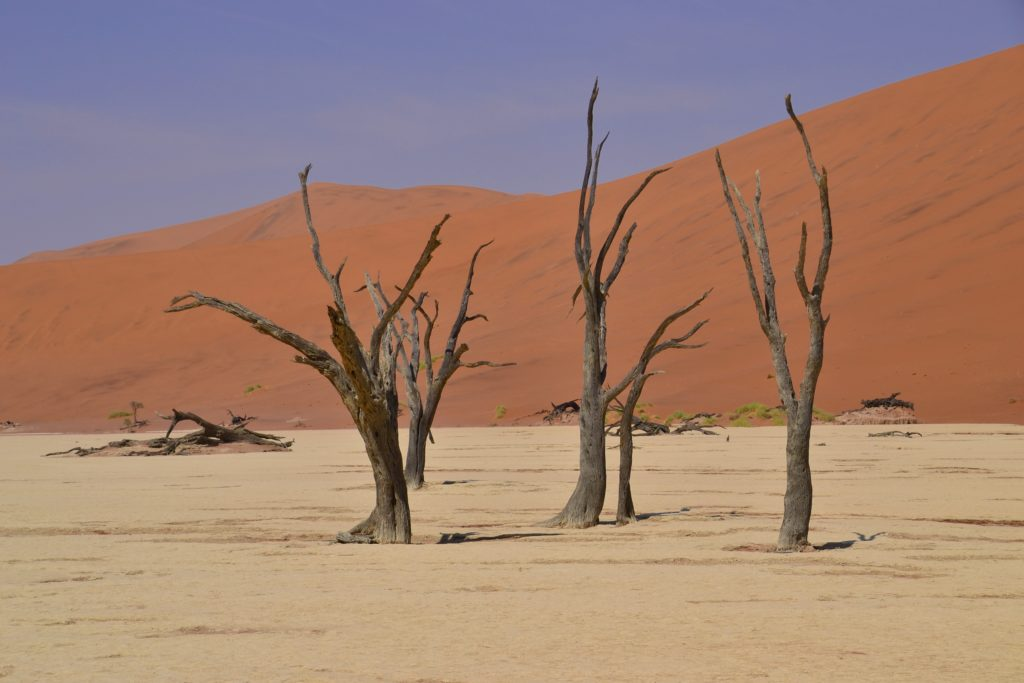 visiting Deadvlei, on a self-drive trip in Sossusvlei, Namibia
