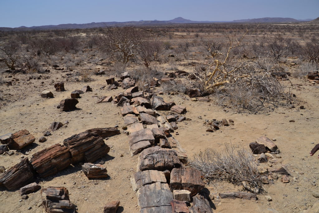 Fossilized tree trunks, Petrified Forest, Namibia