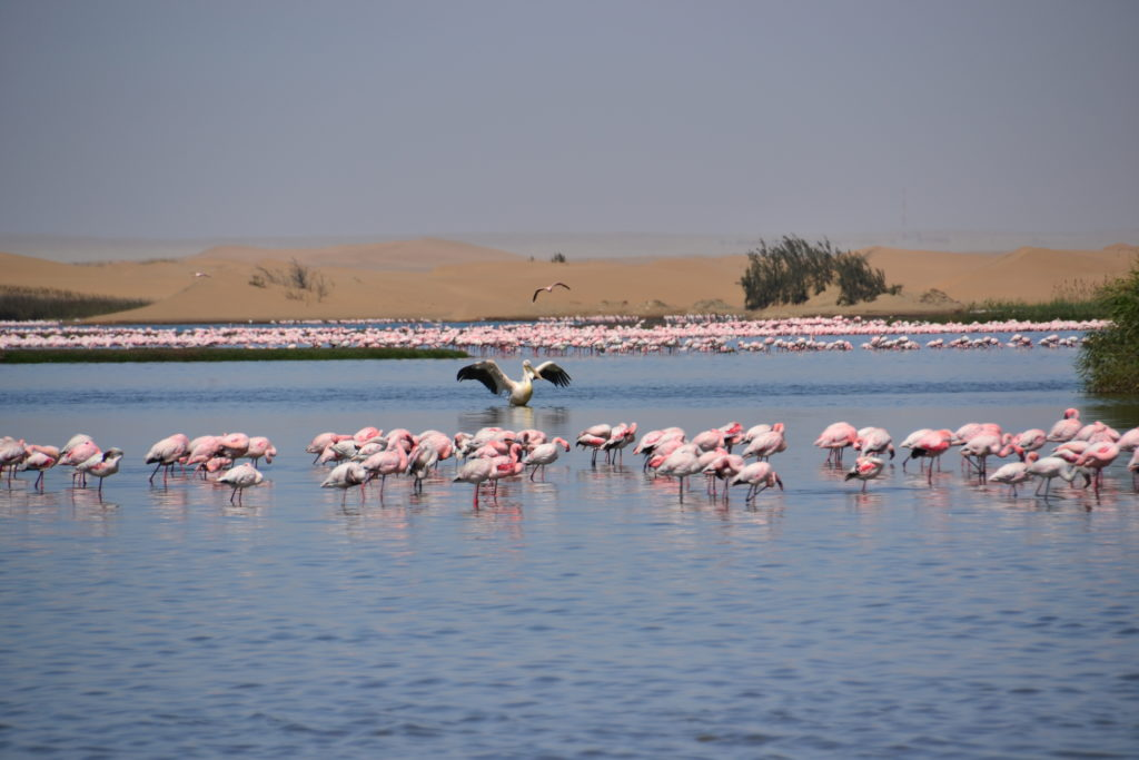 Lagoon of Walvis Bay, Namibia