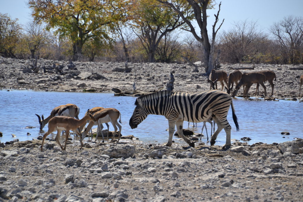 Widlife in Etosha, Things to know before travelling to Namibia