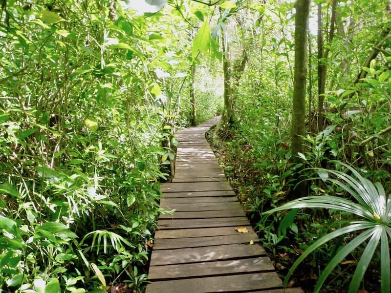 a bardwalk leading to Sian Ka'an reserve