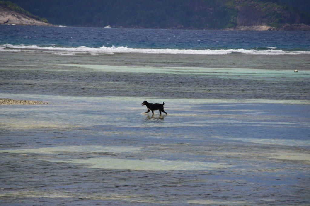 Happy dog playing in the water, Seychelles