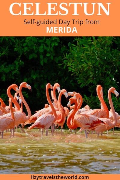 Celestun - self-guided day trip from Merida