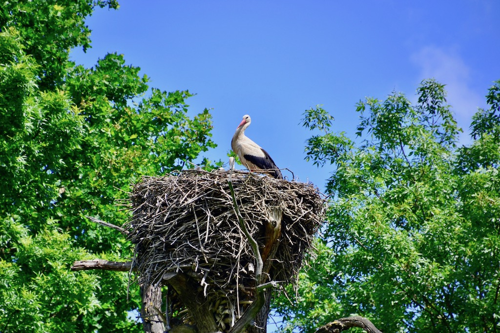 One Day Trip To The Stork Town MARCHEGG, Austria