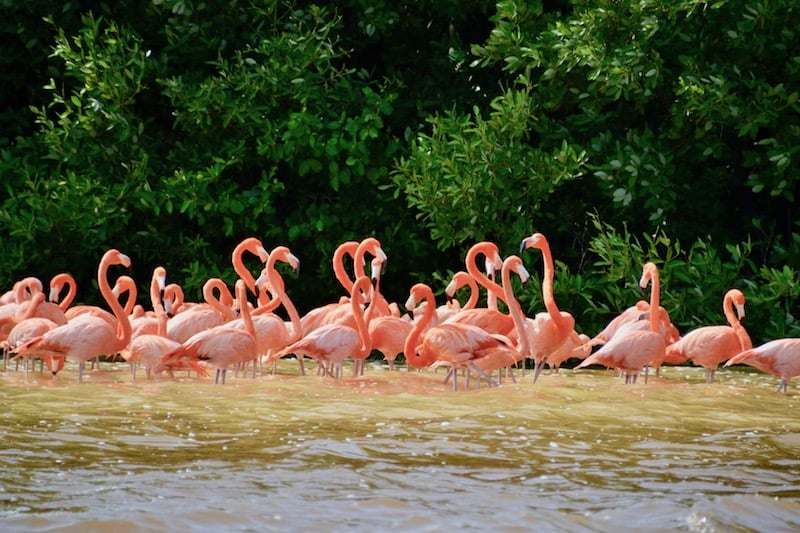 the famous flamingos in Celestun - self-guided day trip