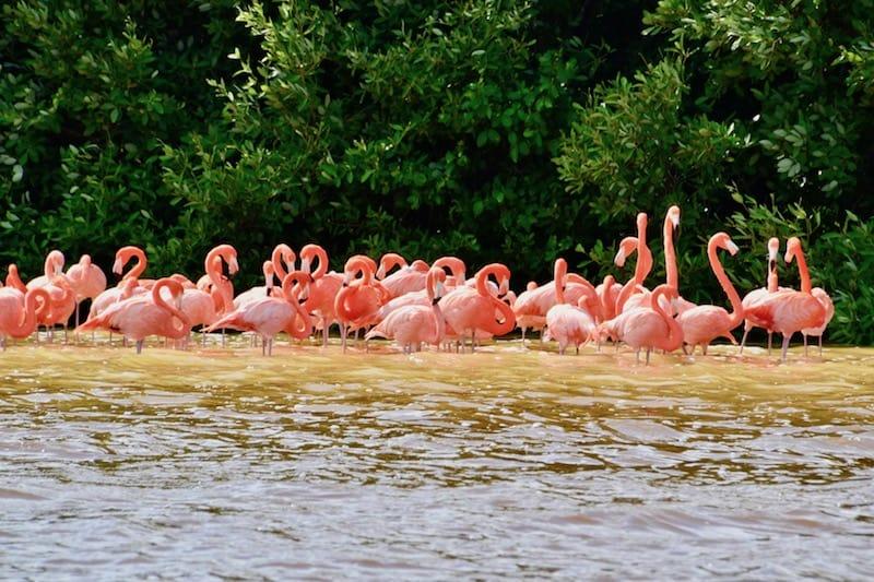 flamingos in Celestun - self-guided day trip