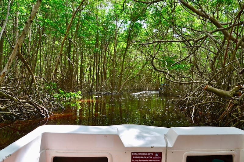 taking a boat tour through the mangroves forest in Celestun - self-guided day trip
