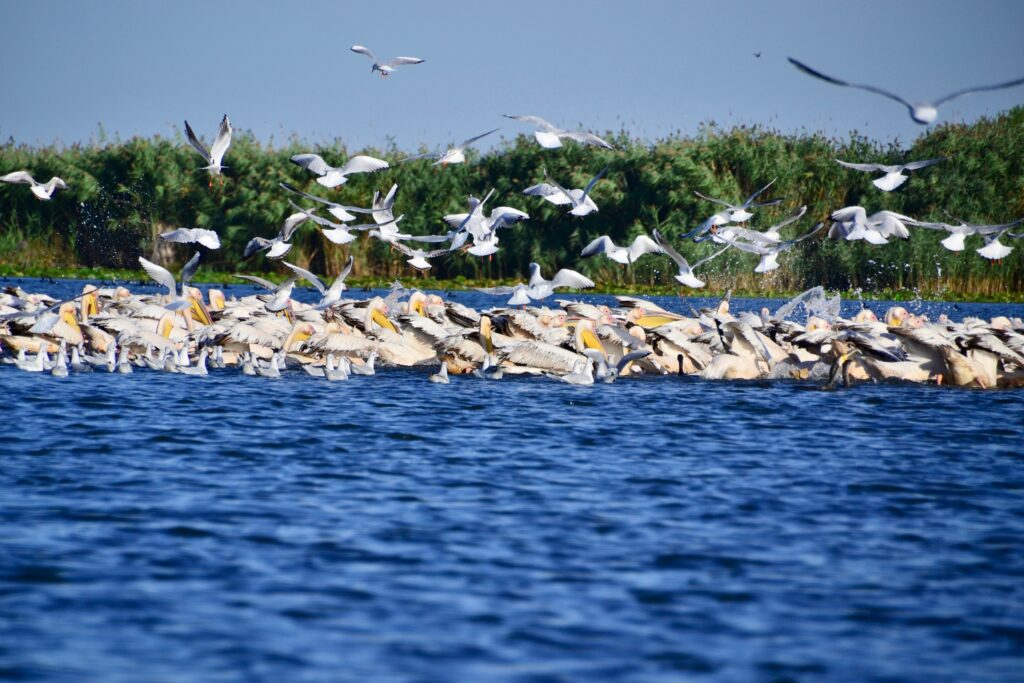 A complete guide to the Danube Delta