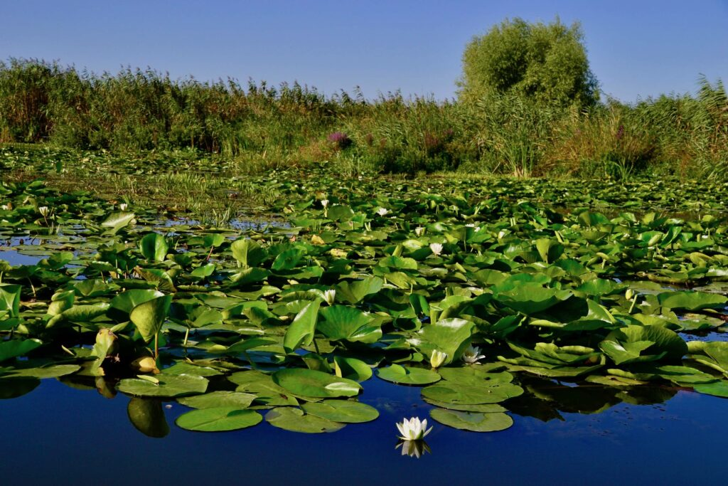 A complete guide to the Danube Delta.
